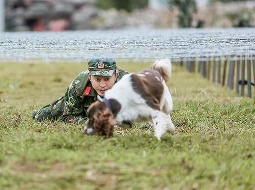 《奇犬》难度升级 沙溢训练失控赵一诺心疼爱犬