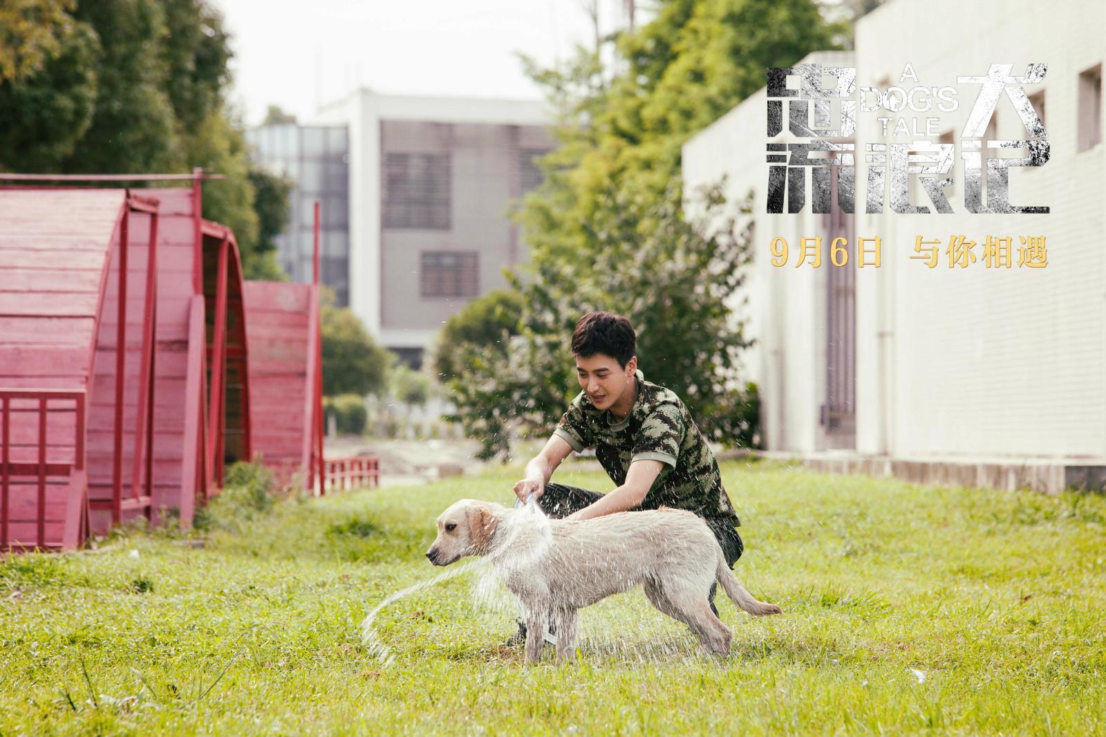电影《忠犬流浪记》发布定档预告 9月6日温情上映只为感动你